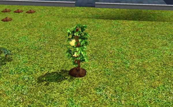 Life Fruit for use with the Ambrosia Recipe in the Sims 3