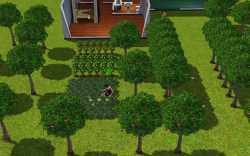 When you learn to garden properly in the sims 3, you can make farms that make this one look tiny
