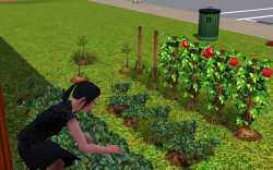 Fertilize your garden, and weed it regularly to keep plants healthy and producing great crops.