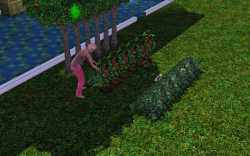 Plant your crops in rows for efficiency
