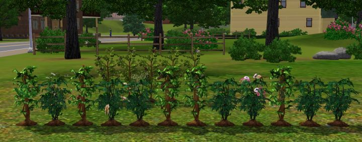 Herbs and Coffee Beans in The Sims 3 University Life